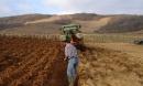 plantation d'une nouvelle vigne