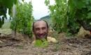 vu dans les vignes cet été ...