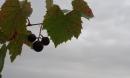 L'automne aux BALLOQUETS